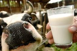В России могут вырасти закупочные цены на молоко