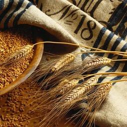 Трейдерам: что показал рынок зерновых в апреле?