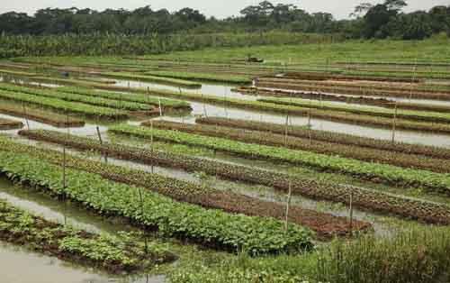 Ферма в Бангладеш