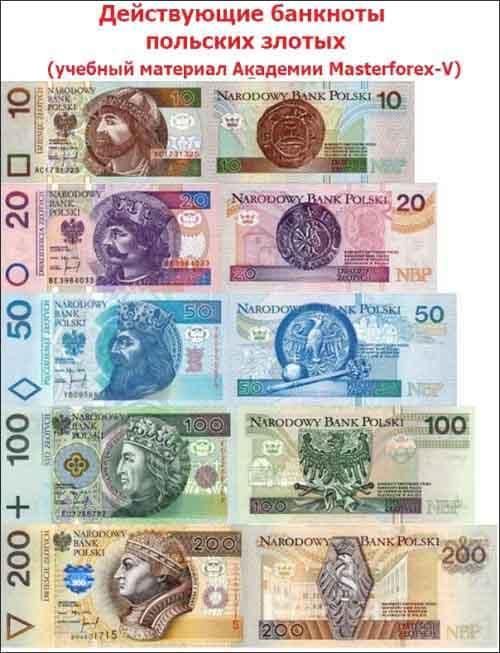 Действующие банкноты польских злотых