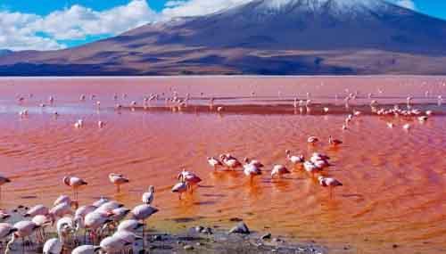 Красная лагуна, Боливия