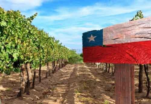Ферма в Чили