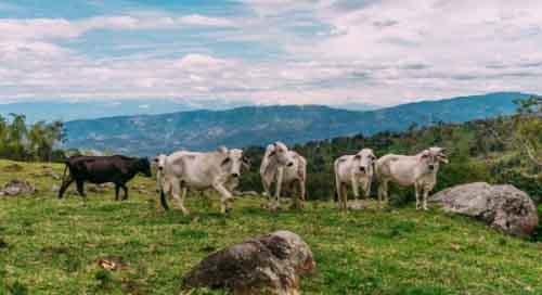 Ферма в Колумбии.