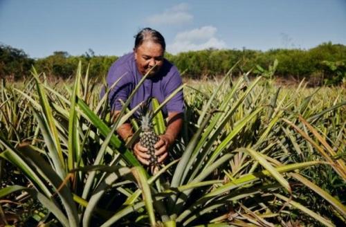 Сельское хозяйство Багам