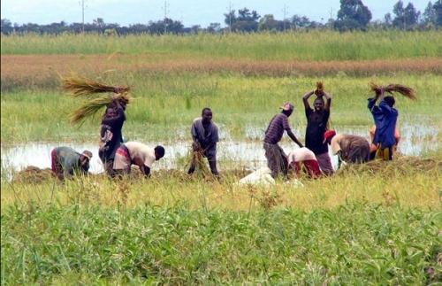 Сельское хозяйство Бурунди