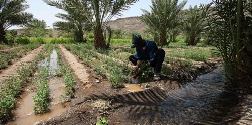 Сельское хозяйство Джибути