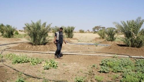 Сельское хозяйство Эритреи