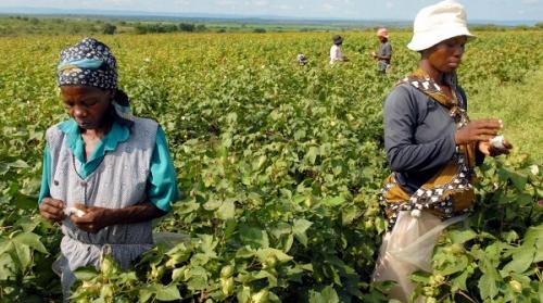 Сельское хозяйство Эсватини.