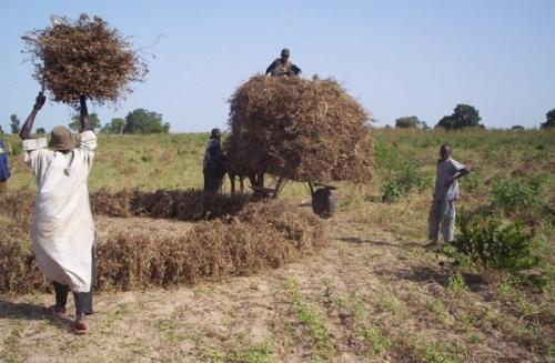 Сельское хозяйство Гамбии
