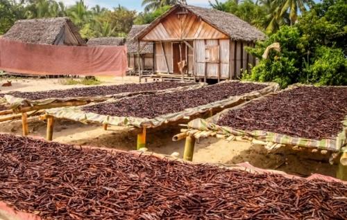 Производство ванили, Мадагаскар