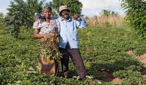 Сельское хозяйство Малави