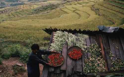 Сбор урожая в Бутане