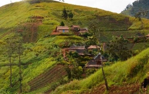 Сельское хозяйство Папуа – Новой Гвинеи
