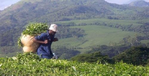 Сельское хозяйство Сент-Люсии