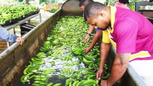 Сельское хозяйство Самоа