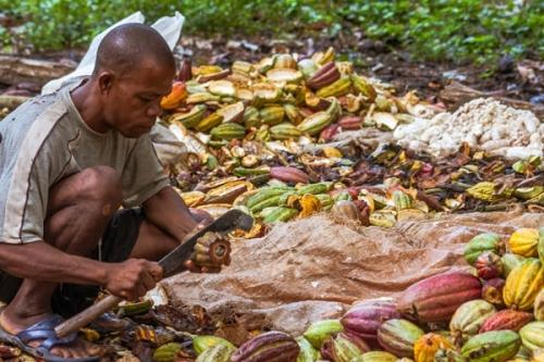 Сельское хозяйство Сан-Томе и Принсипи