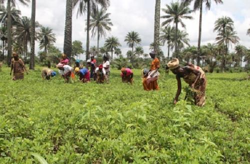 Сельское хозяйство Сьерра-Леоне