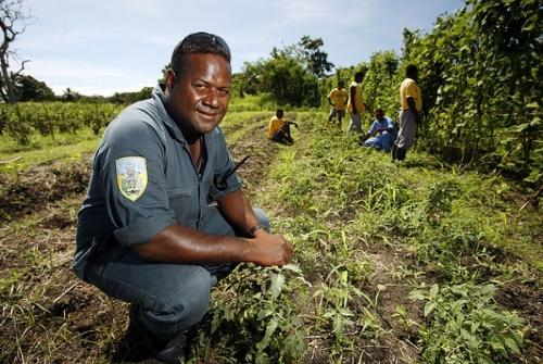 Сельское хозяйство Соломоновых островов