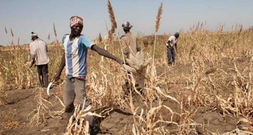 Сельское хозяйство Судана