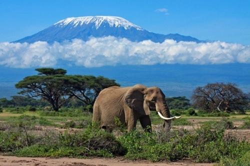 Вид на Килиманджаро, Танзания