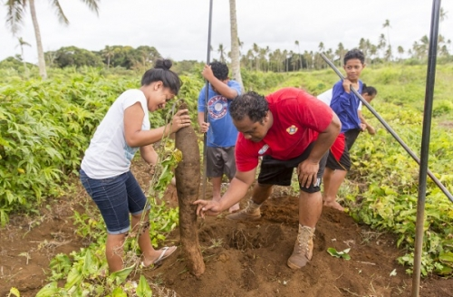 Сельское хозяйство Тонга
