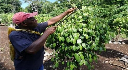 Сельское хозяйство Вануату