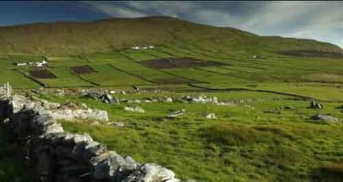 Ирландская ферма
