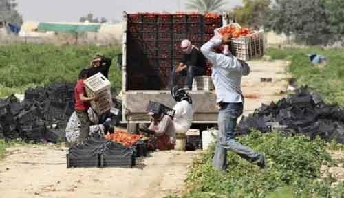 Ферма в Иордании