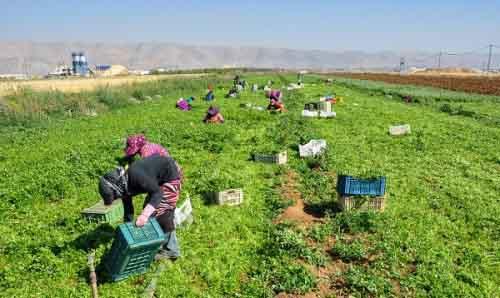 Ферма в Ливане