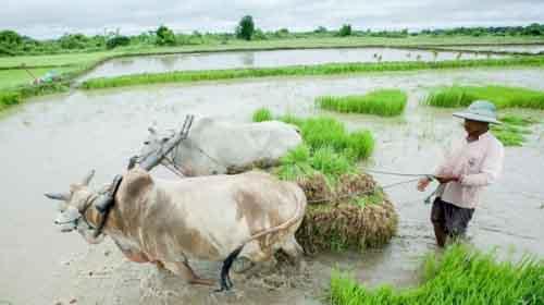 Ферма в Мьянме