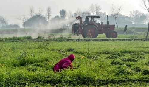 Ферма в Пакистане
