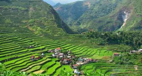 Рисовое поле, Филиппины