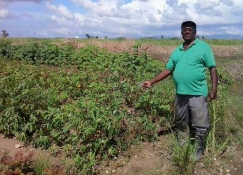 Сельское хозяйство Тринидада и Тобаго