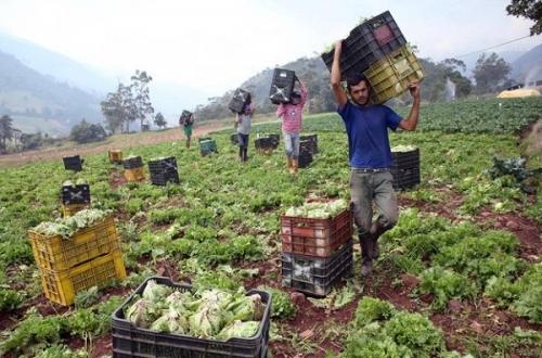 Венесуэльская ферма